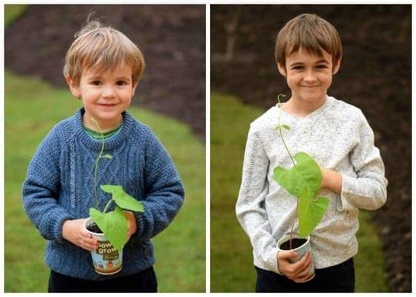 Sow and Grow project - our runner bean plants