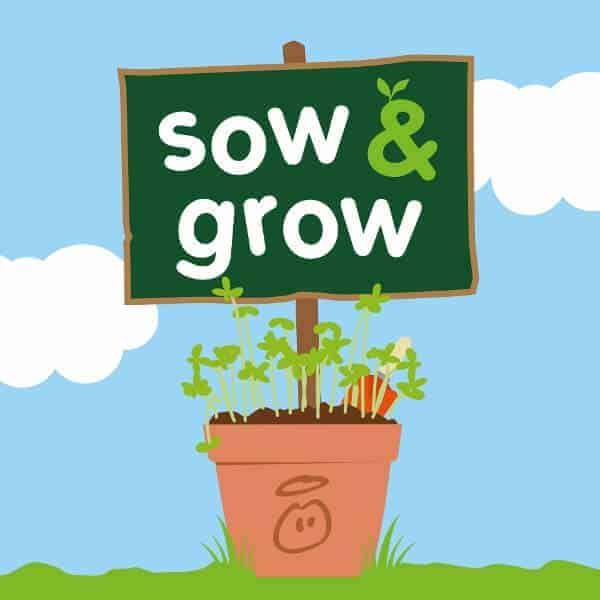 innocent sow and grow project - growing food with kids
