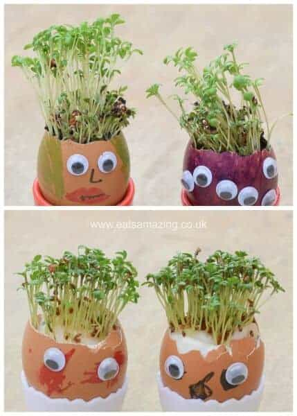 How to grow cress in egg shells - soil vs cotton wool - the results fun experiment for kids from Eats Amazing UK