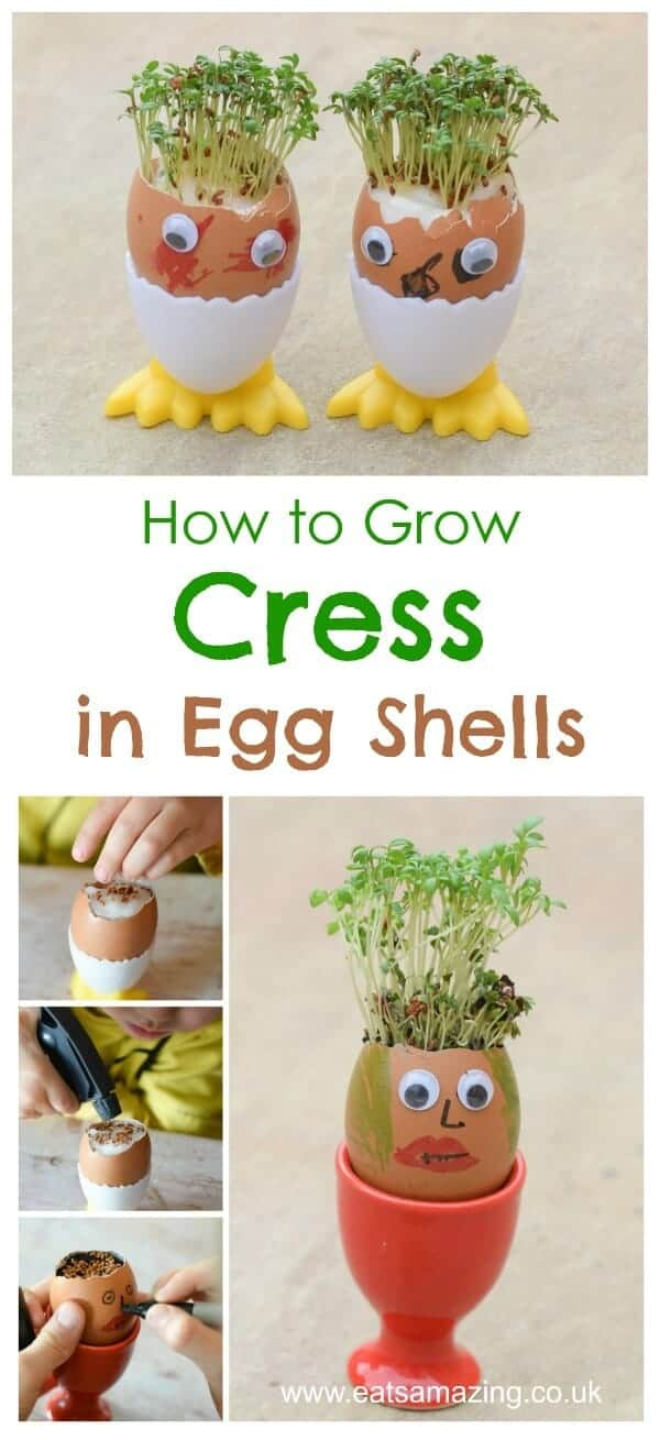 How to grow cress in egg shells with egg head funny face decorations and cress hair - fun gardening activity for kids from Eats Amazing UK