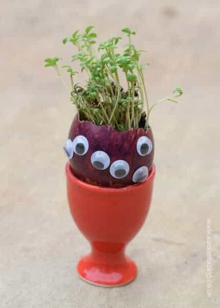 How to grow edible cress in egg shells with a fun monster design egg head - great gardening activity for kids from Eats Amazing UK