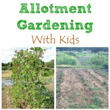 Growing Food on an Allotment with Kids