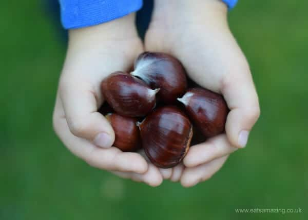 How to cook sweet chestnuts - everything you need to know about picking and roasting chestnuts - Autumn foraging with kids - Eats Amazing UK