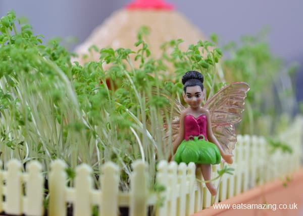 Growing cress in the My Fairy Kitchen Garden - Eats Amazing UK